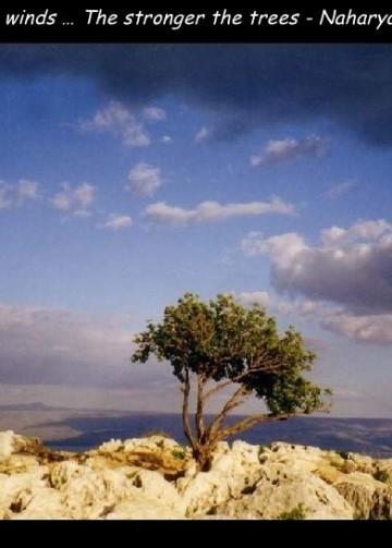 صورة من بلادي فلسطين